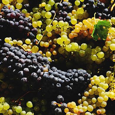 DOC wine_2